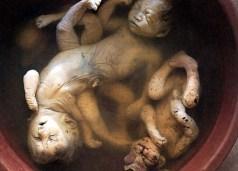 Fetos deformados em função do agente laranja. Crédito: cheeseslaves.com