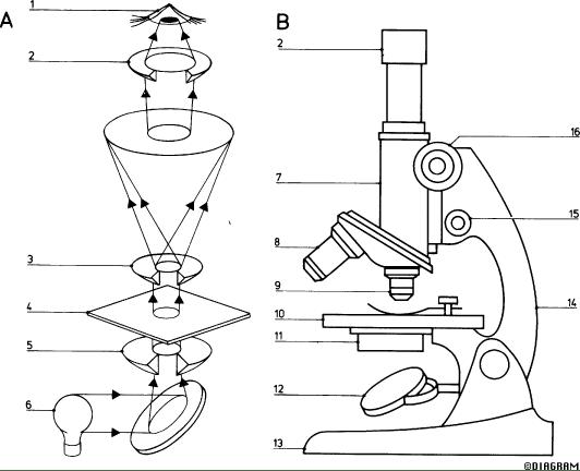 Biology 1 / CM-3-Microscope intro
