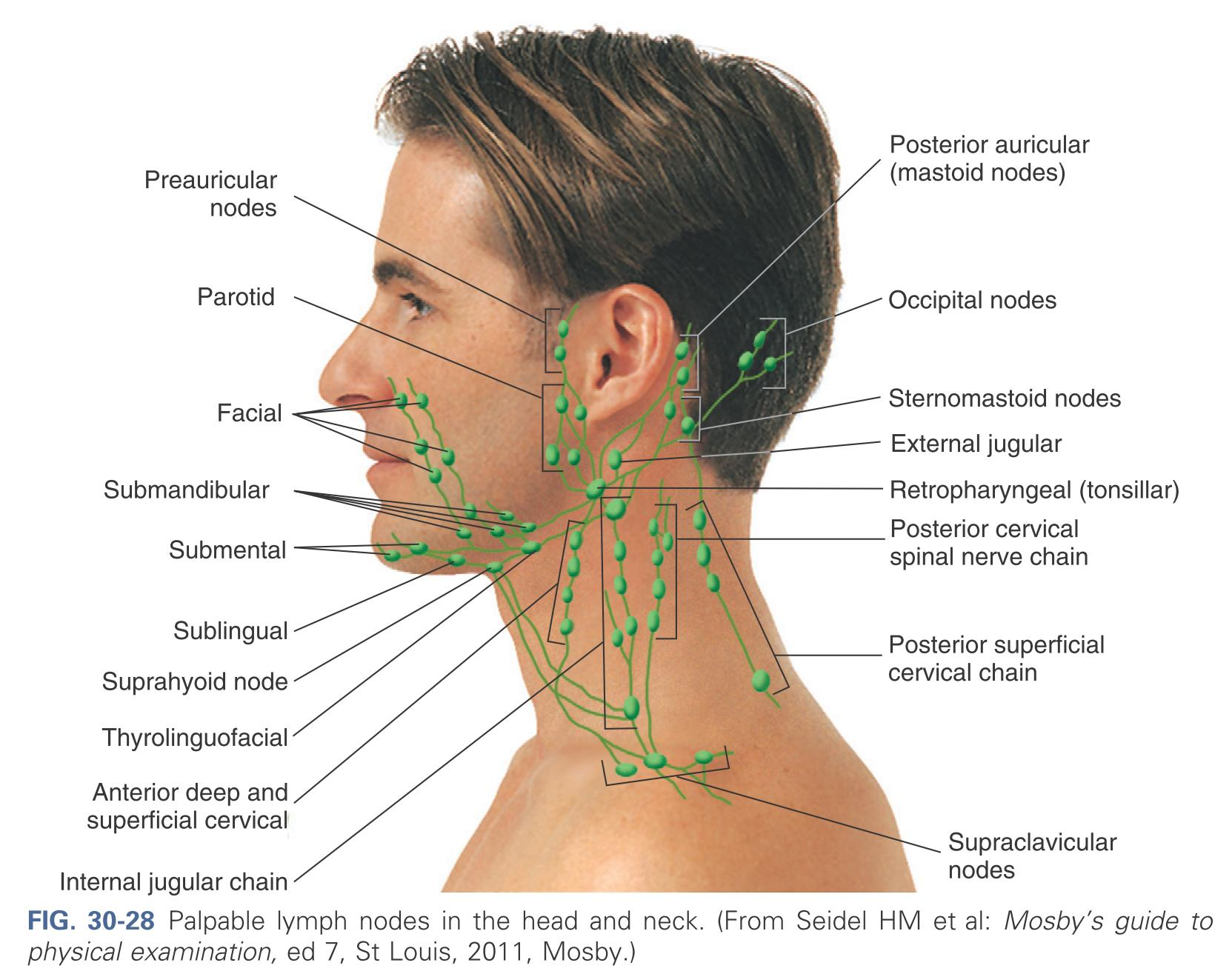location of lymph nodes in armpit diagram node locations face forehead