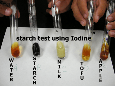 Process Flow Diagram Using Javascript Food Test 1 Starch Test Biology Notes For Igcse 2014