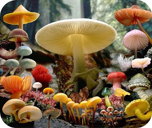 Fungi Kingdom Biology Notes for IGCSE 2014
