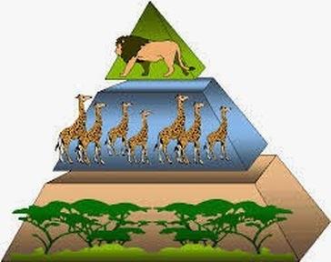 Food Pyramids Biology Notes For IGCSE 2014