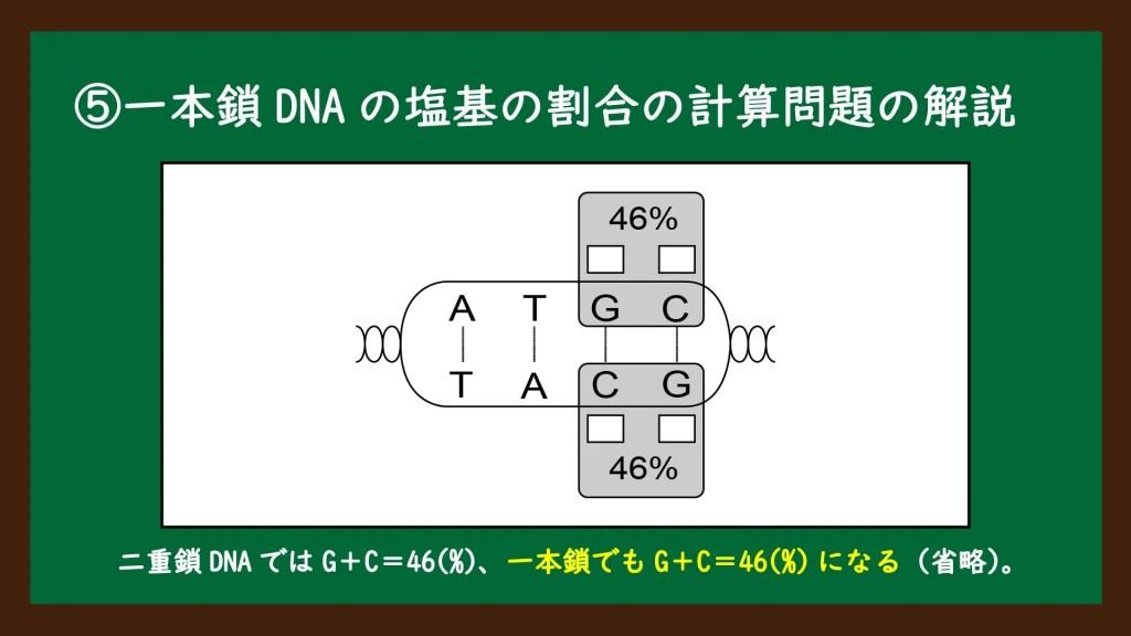 一本鎖DNAの塩基の割合の計算問題の解説①