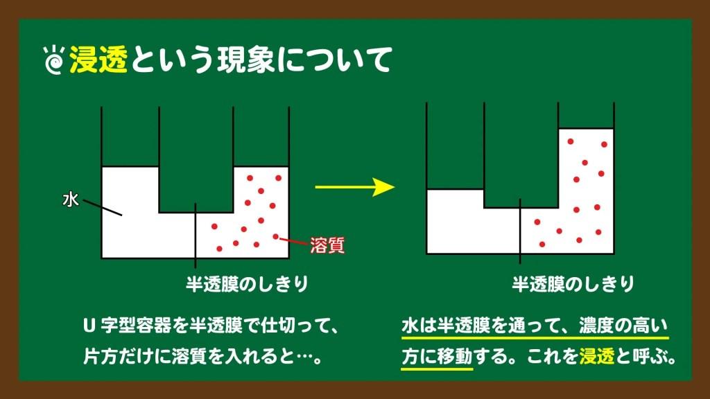 スライド3:U字管を用いた浸透の実験