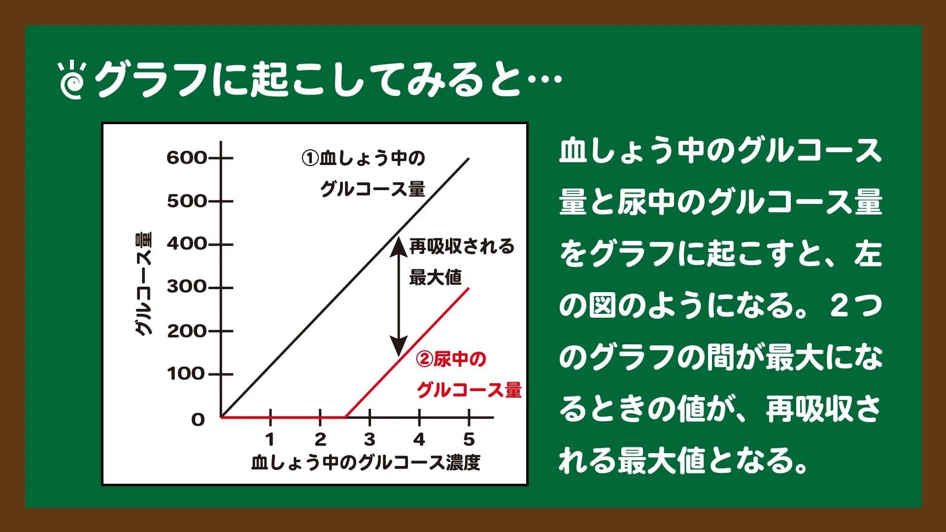 スライド9:再吸収されるグルコース量はグラフではこうなる