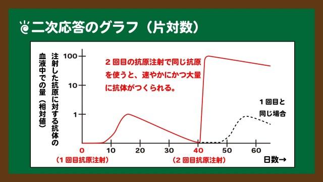 スライド14:二次応答のグラフ