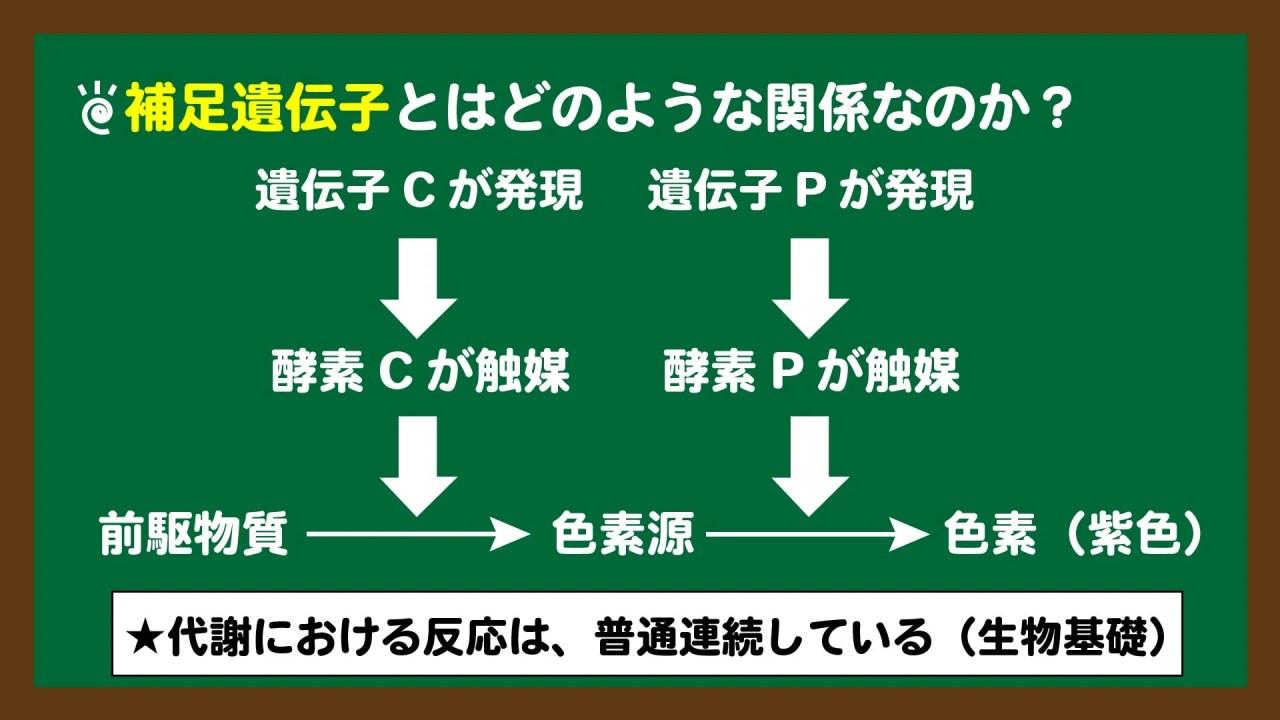 スライド2:補足遺伝子は、連続した反応に関わる遺伝子でもある