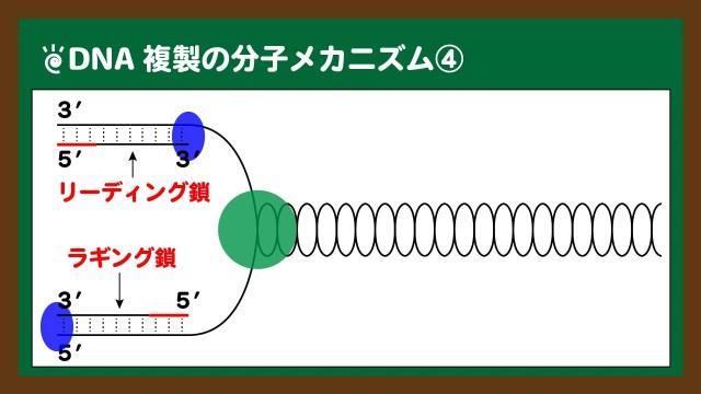 図.DNAポリメラーゼによる新生鎖の合成