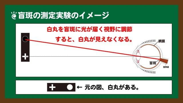 スライド3:盲斑の測定実験のイメージ
