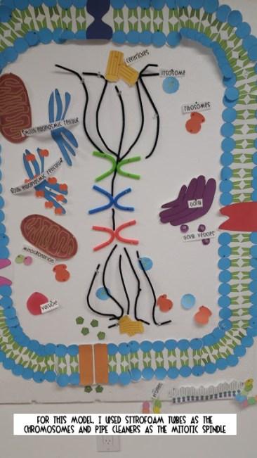 Biology Roots Cellfie