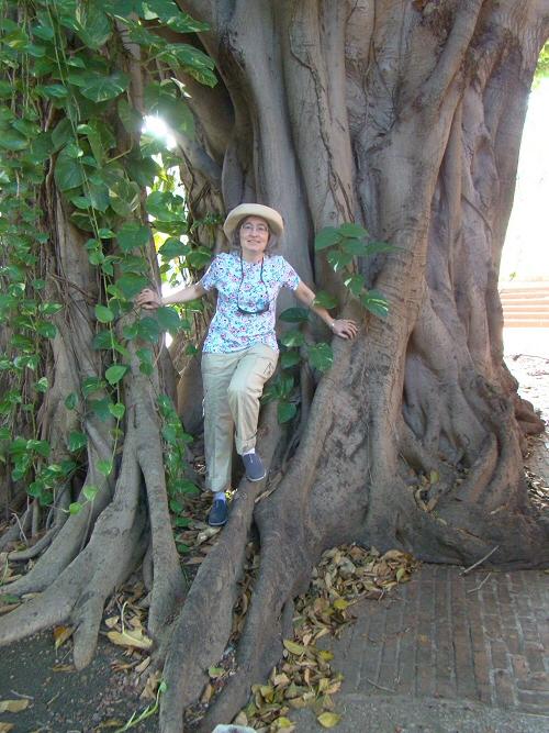Tree in Havana