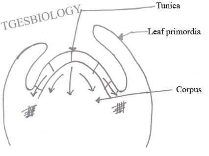 how to do a stem and leaf diagram carrier furnace wiring plant tissues - biology4isc