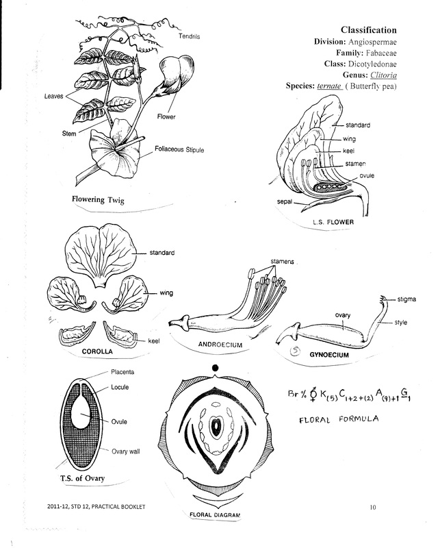 Printables. Taxonomy Biology4isc. Mywcct Thousands of