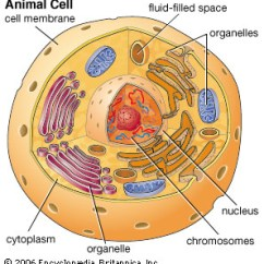 Human Cell Wall Diagram Labeled 1998 Ford F 150 Fuse A. : Unit Of Function - Biology4isc