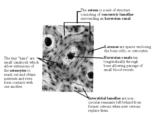 8. Locomotion - BIOLOGY4ISC