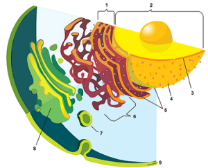 Animal and Plant Cell Labeling