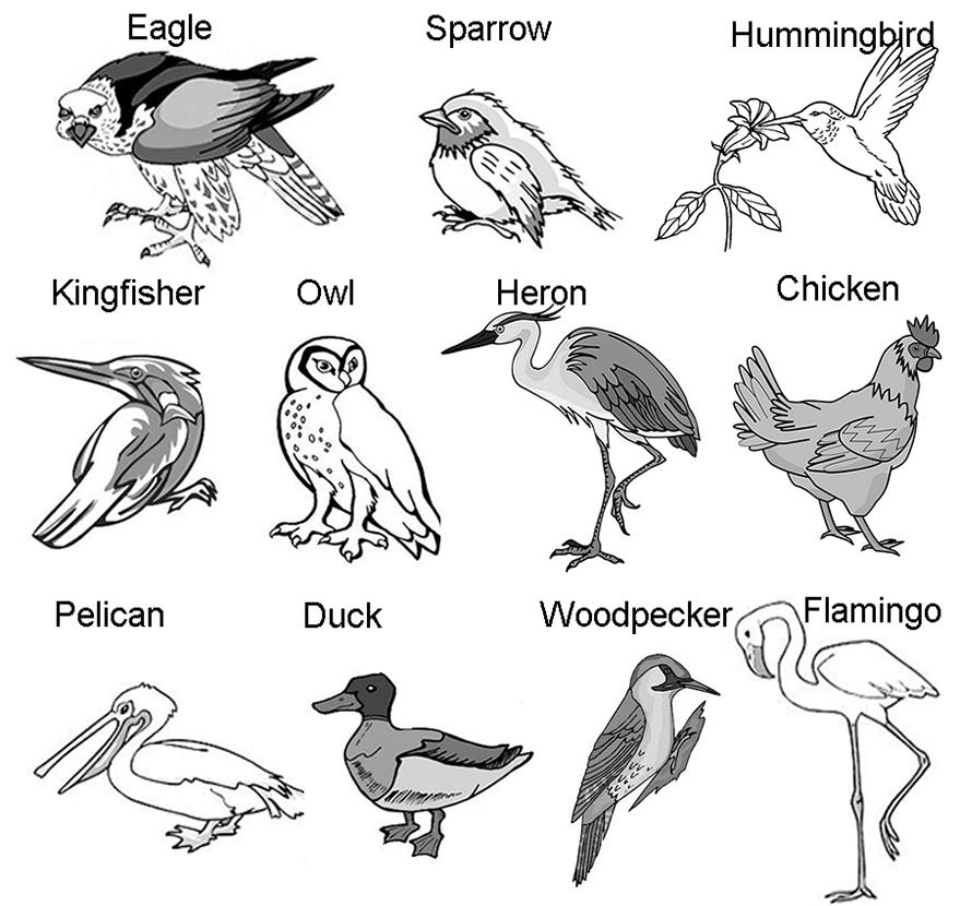 Bird Beaks and Feet