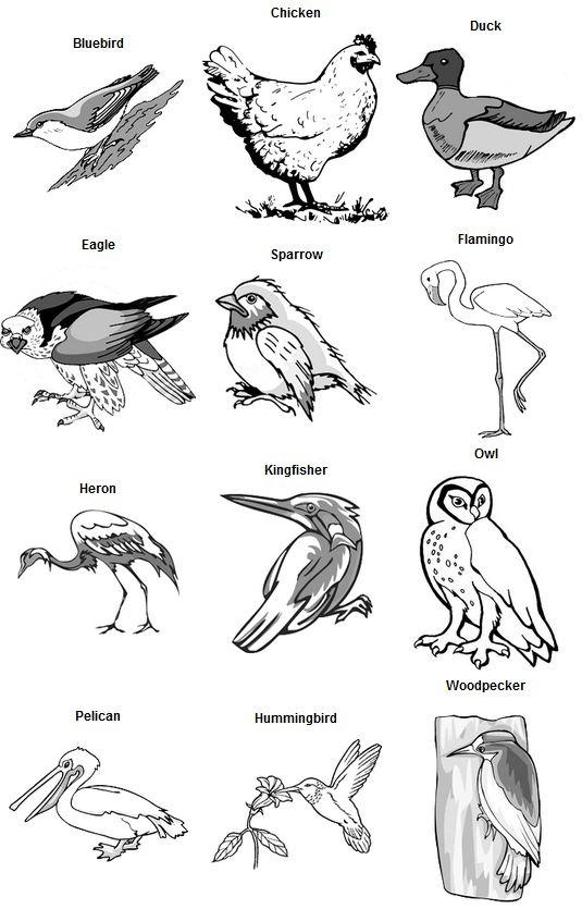Names Of Different Types Of Bird Beaks Pictures to Pin on