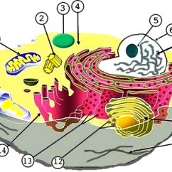 3d Animal Cell Coloring Diagram Axxess Gmos 04 Wiring And Plant Labeling Key