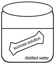 Investigation: Osmosis and Water Potential