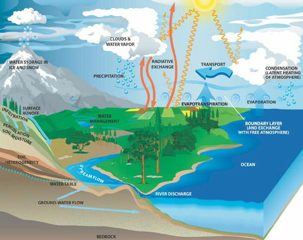transpiration - definition and function of the water cycle biology - explain  water cycle with diagram