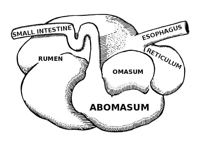 Acquire Definition In Biology