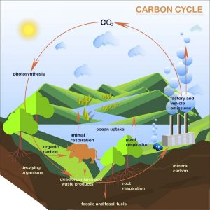 Detailed Scientific Nitrogen Cycle Diagram Carbon Cycle Definition Steps And Examples Biology