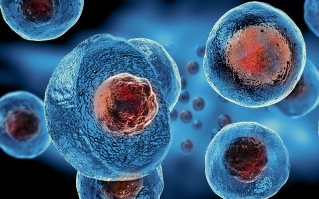 Image result for embryonic-cell