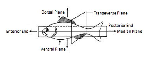 image of body plane