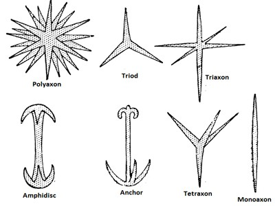 image of spicules