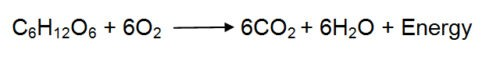image of Aerobic respiration equation