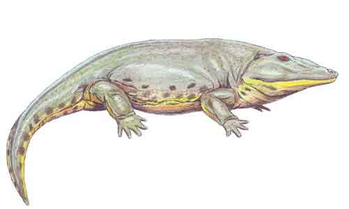 image of Eryops