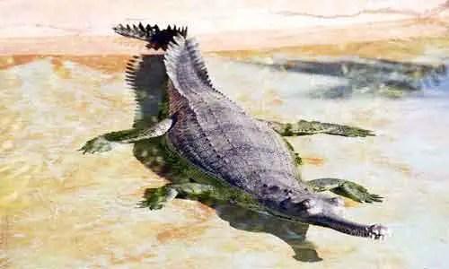 image of Gharial-(Gavialis gangeticus)