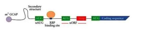 image of mRNA