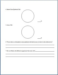 Printables. Microscope Lab Worksheet. Lemonlilyfestival ...
