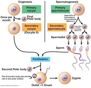 Biology | The WARAK WARAK Method | Page 2