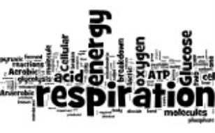 TOPIC 9 : Photosynthesis vs. Cellular Respiration