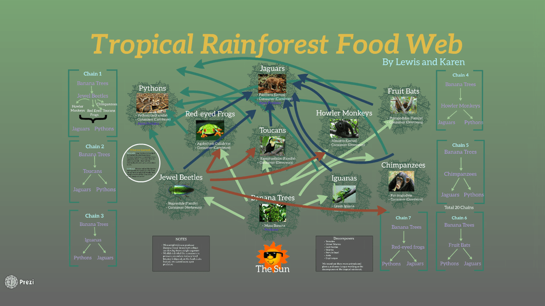 Chain Rainforest Biome Food Tropical