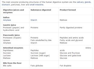 digestionEnzymesForSpecificFood