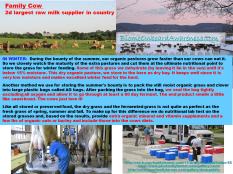 Family Cow Grass-fed Feeding