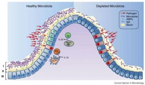 Picture of the Microbiome: Healthy vs UnHealthy