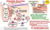 Immunity_ Inflammation in a gut