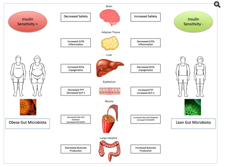The Role and Influence of Gut Microbiota in Pathogenesis and Management of Obesity and Metabolic Syndrome, https://www.ncbi.nlm.nih.gov/pmc/articles/PMC3984999/