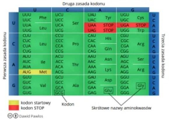 Tabela kodu genetycznego