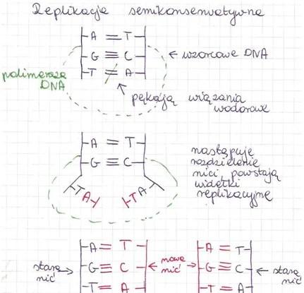replikacja semikonserwatywna