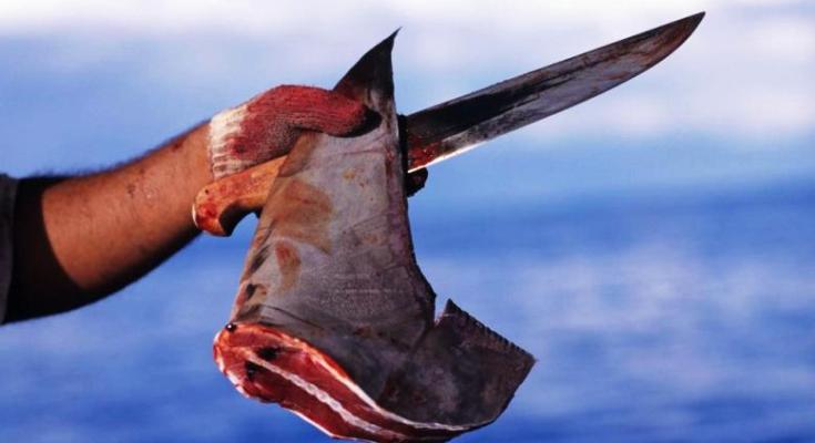 πτερυγιο καρχαρια