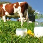 Πιο υγιεινό το βιολογικό γάλα