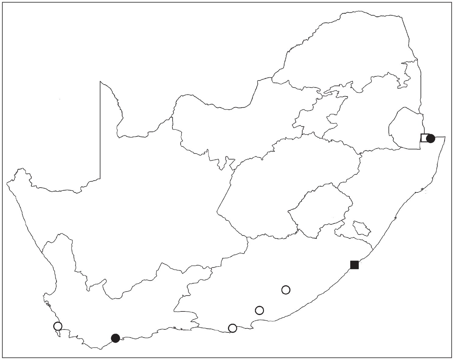 New Data on the Jumping Spiders of South Africa (Araneae