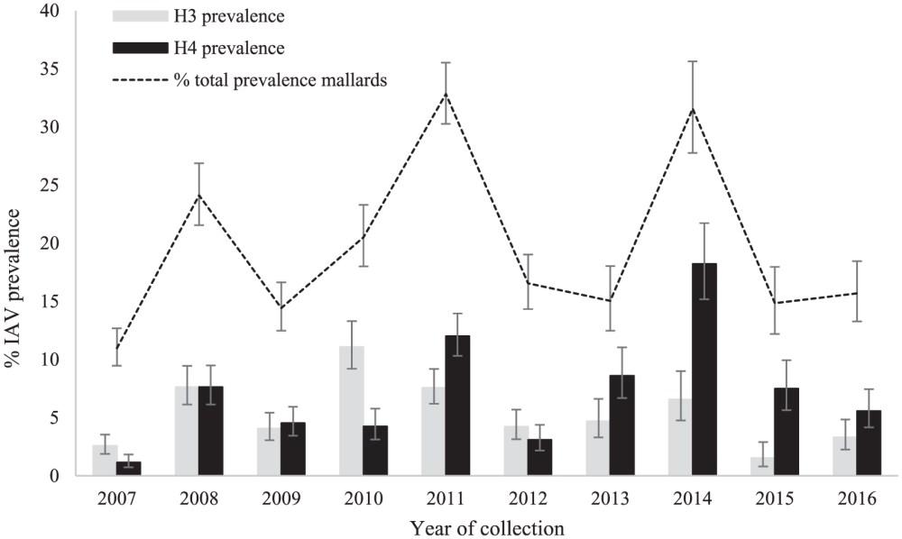 medium resolution of  those of h3 gray bars and h4 black bars hemagglutinin subtypes in mallard samples from northwestern minnesota august 23 to september 26 2007 2016