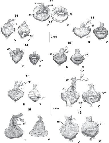Comparative Study of Mexican Geotrupini (Coleoptera